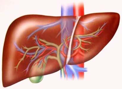 thời kì ung thư gan, các giai đoạn ung thư gan, ung thư gan giai đoạn 1, ung thư gan giai đoạn 2, ung thư gan giai đoạn 3, ung thư gan giai đoạn cuối, ung thư gan giai đoạn di căn